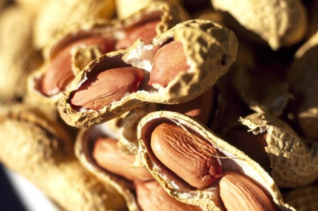 Immunity quiz peanuts