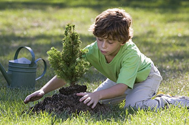 A boy planting a tree in the garden