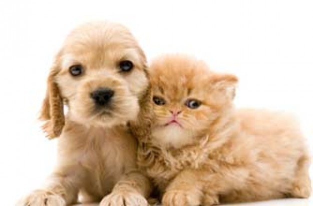 Cute puppy and kitten_istock