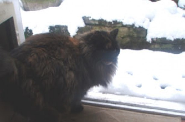 Your snow pictures, Cat and snow