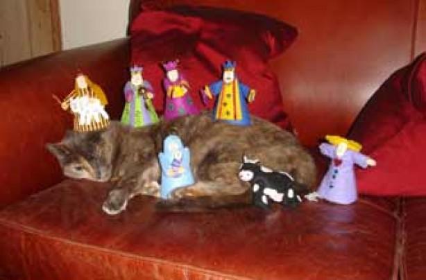 Muffin the nativtiy cat