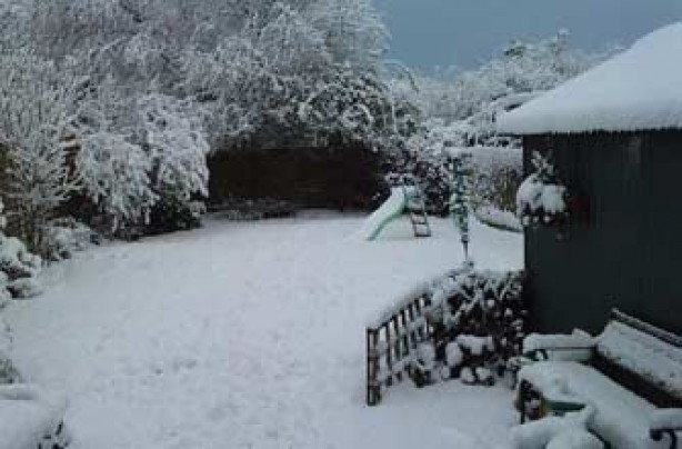 Ray's garden in the snow