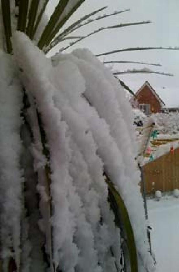 A snowy garden sent in by Lisa