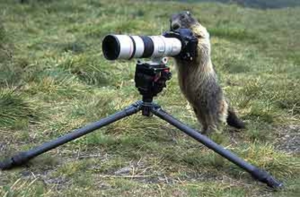 funny animals, funny animal pics, animal pics, meercat, telescope