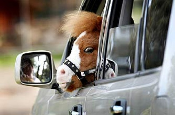 funny animals, funny animal pics, animal pics, horse