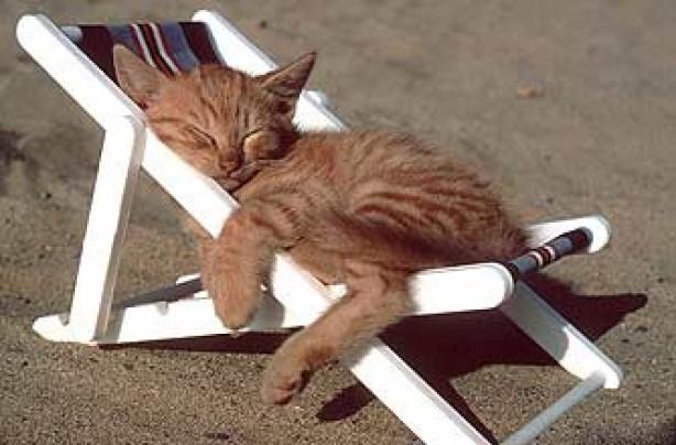 funny animals, funny animal pics, animal pics, cat, sleeping