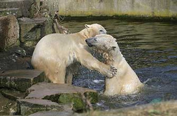 polar bear, cute animal, funny animal,