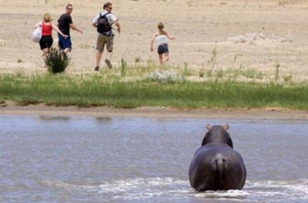 Hippo, funny animal picture, animal, animal pic, funny,