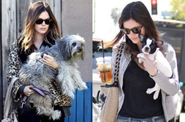 Rachel Bilson, celebrity dogs, dogs, celebrities