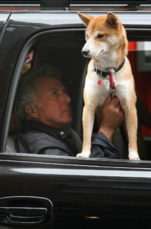 Dustin Hoffman, celebrity dogs, dogs, celebrities