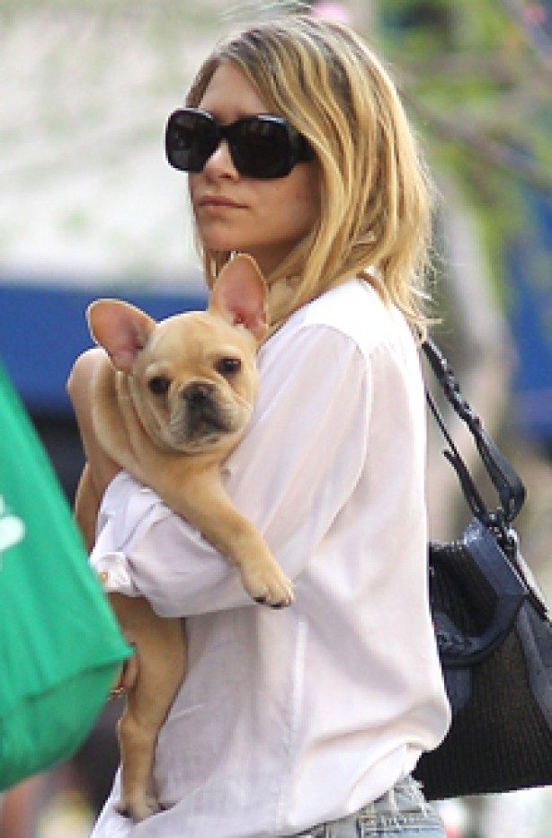 Ashley Olsen, celebrity dogs, dogs, celebrities
