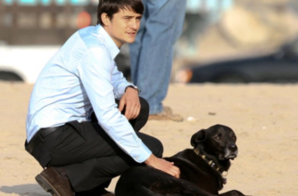 Orlando Bloom, celebrity dogs, dogs, celebrities