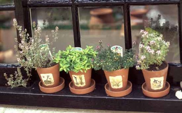Gardening for kids: Grow your own herbs