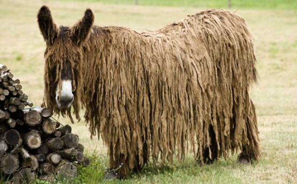 Donkey, funny animal pic
