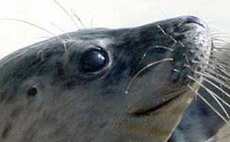 Discount voucher: National Seal Sanctuary, Cornwall