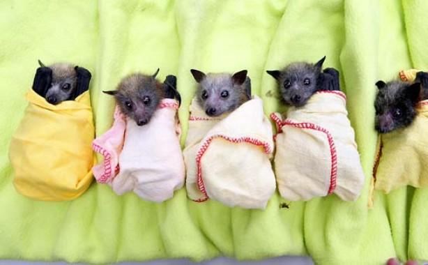 Rescued bats