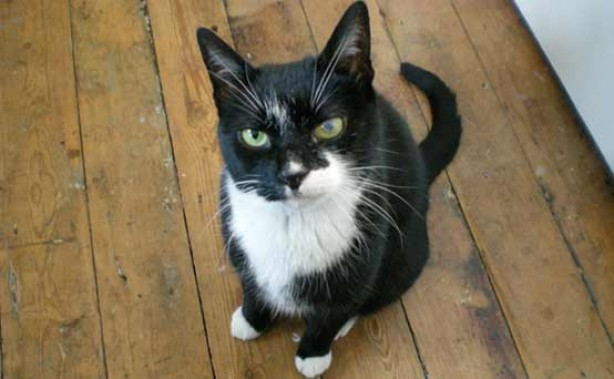 Pets gallery: Mr Boots the cat