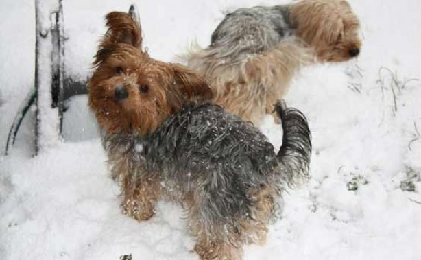 Pet pics: Billy & Max