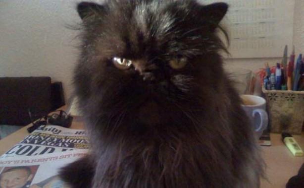 Pet pics: Murphy Moo