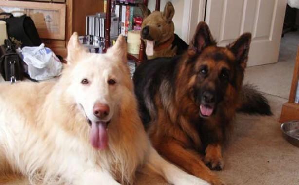 Your pet pics: Artan and Tig