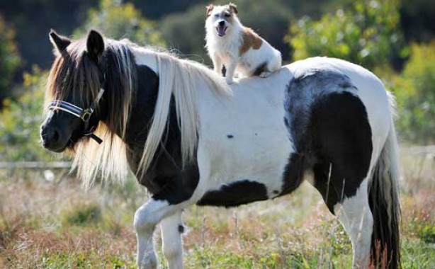 Pony and dog friends?