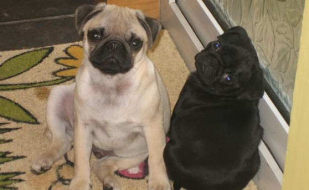 Your pet pics: Rufus and Otis