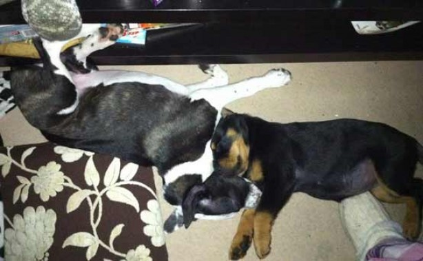Your pet pics: Kendra and Charlie boy