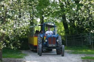Days out: Healey's Cornish Cyder Farm