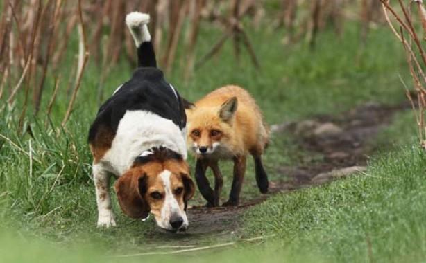 Dog hunting?