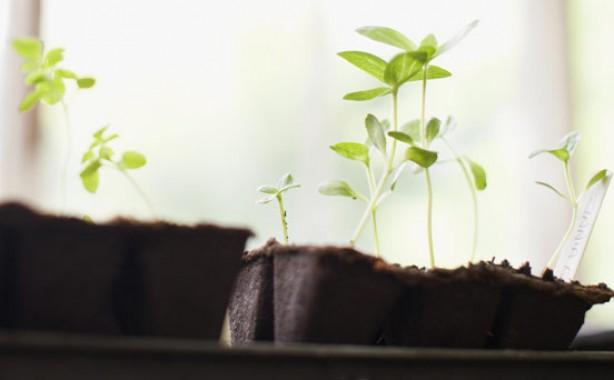 Money-saving gardening tips: Be eco wise