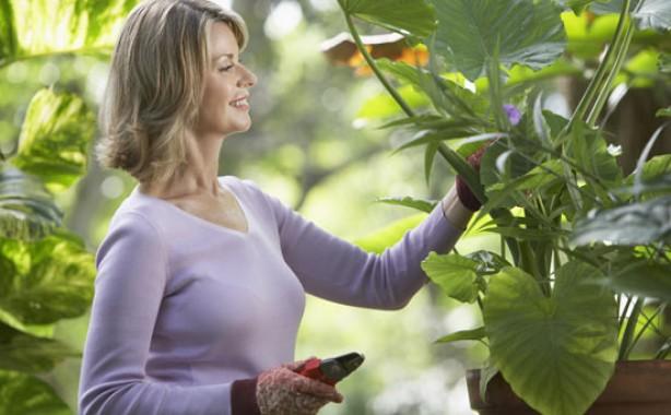 Money-saving gardening tips: Swap samples