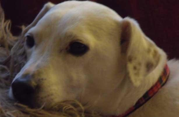 Ginny's dog Toby