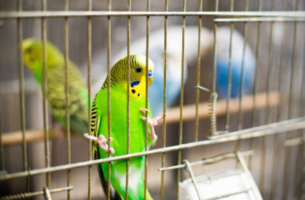 Choose the right family pet: Birds