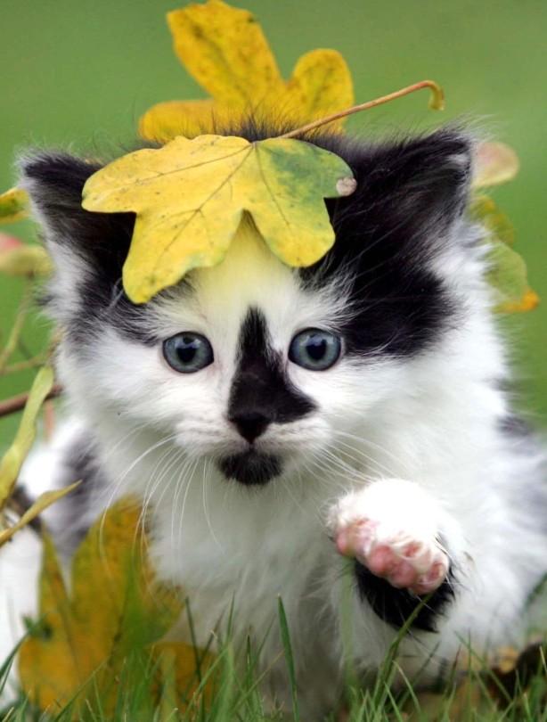 Cats love autumn