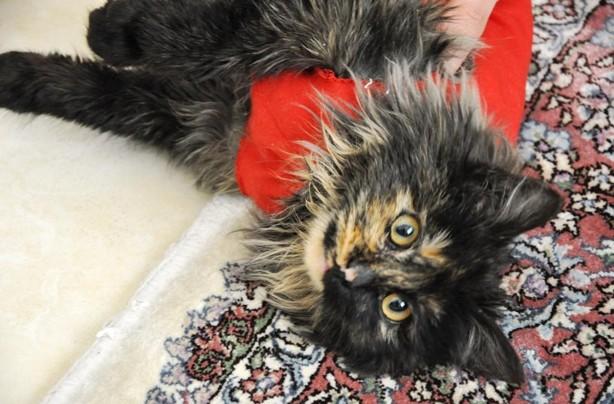 Sahar's cat Sir James