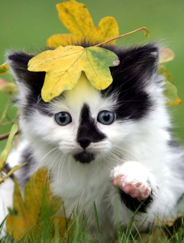 Cat with leaf