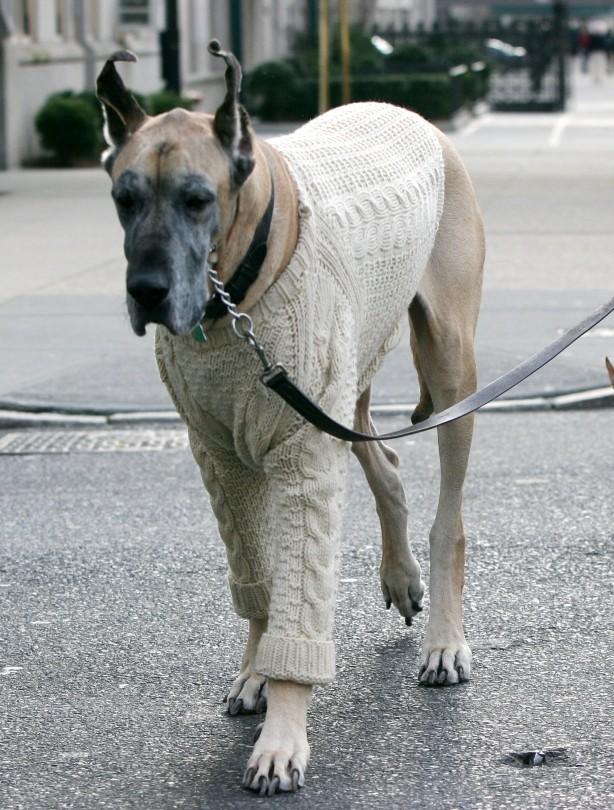 Upper East Side dog