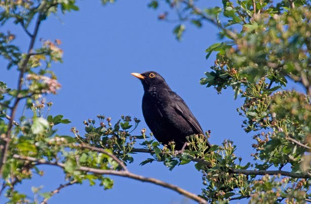 Top 10 British birds