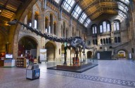 Free museums Natural History Museum London