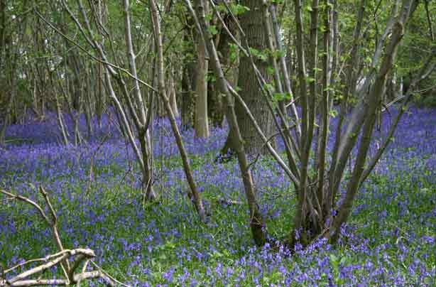 Foxley Wood Norwich_credit_Norfolk Wildlife Trust