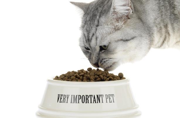 Save money pets