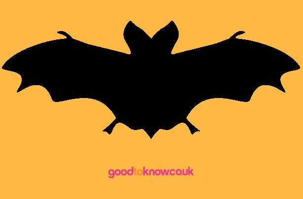 Bat Halloween pumpkin carving template