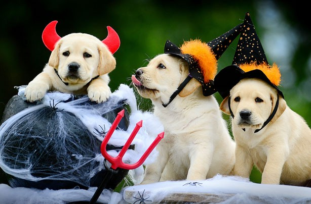 Cute and funny Halloween animal pics - 'Look at us ...