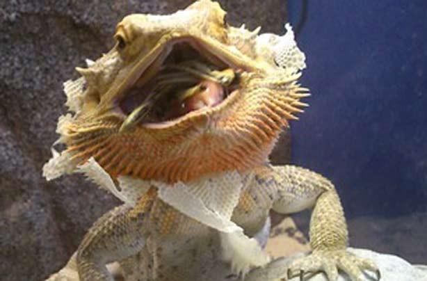 Karen G's funny pet picture