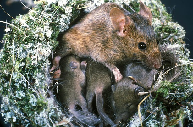 Mouse and Babies