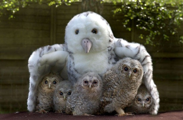 Toy Owl and Baby Owls