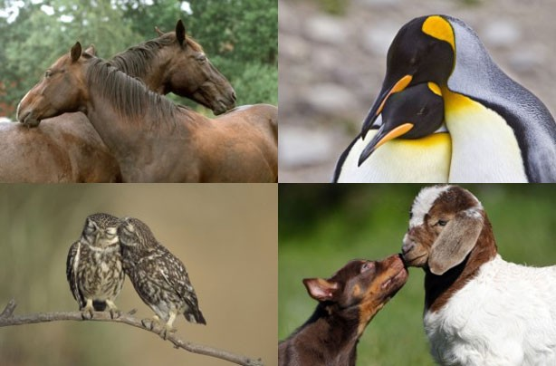 Animals declaring their love