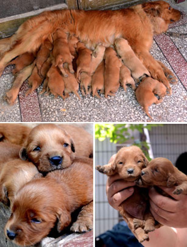 Cute puppies 2
