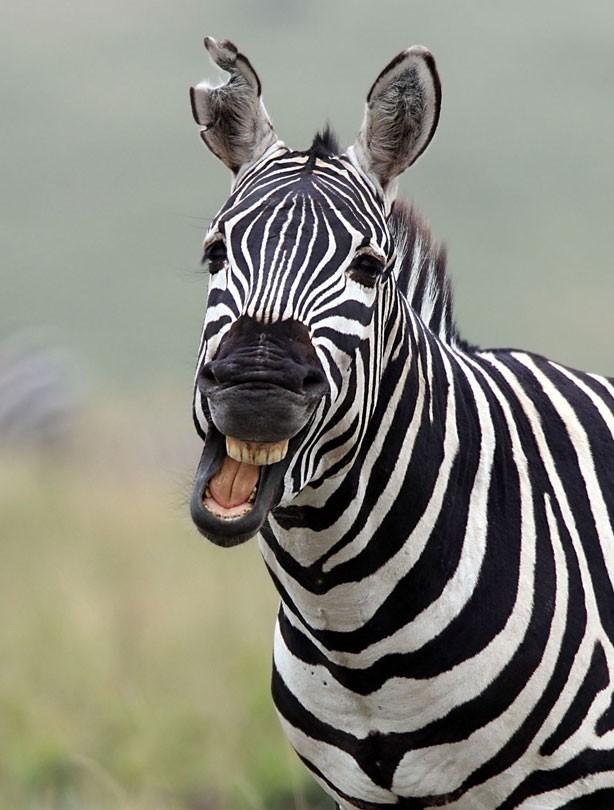 smiling animals