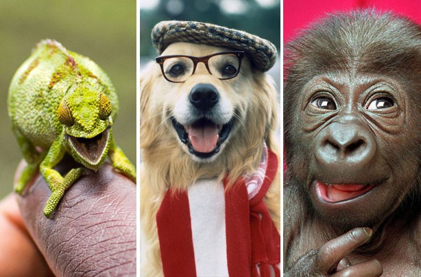 Smiling animals cover pic